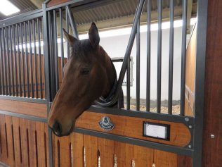 Wilamina - a five-year old mare by Zoffany