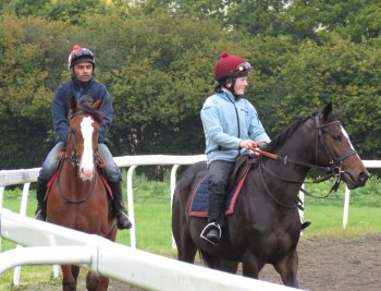 The yearling on the right was sired by Sir Prancealot - a sprint specialist trained at Herridige and retired to stud in November 2012 after three wins from his four races.