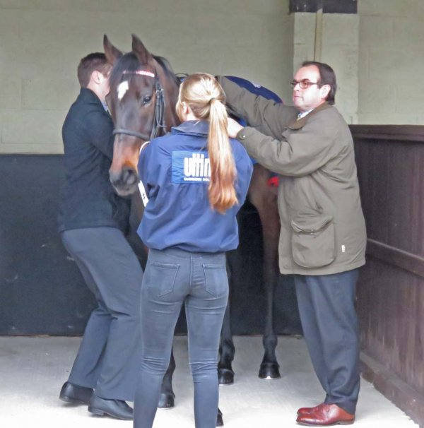 Alan King saddling The Devil's Drop for a Maiden hurdle at Ludlow (February 21)