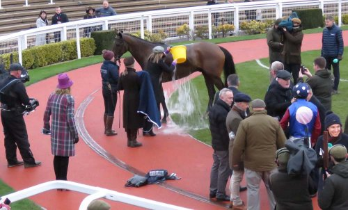 In the winner's enclosure:  Paisley Park gets a cooling bucket of water from trainer Emma Lavelle