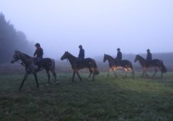 On the way to the gallops - with headlights