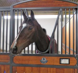 Monoxide - unraced colt by Galileo - has a Derby entry