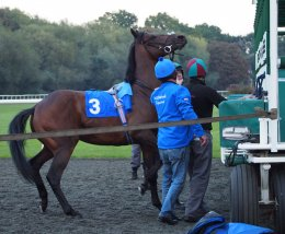 A cross Dubai Star taken out of the stalls