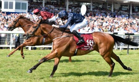 Rhododendron (No. 16) comes up to take the Lockinge (Photo: Newbury Racecourse)