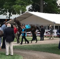 Casino Market - No 9 - in the Saratoga parade ring