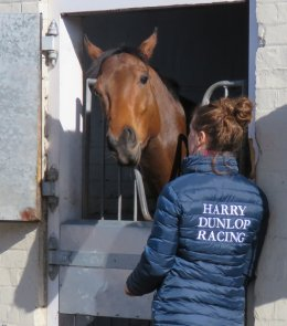 Memories Galore - one of Harry Dunlop Racing's horses at Windsor House Stables