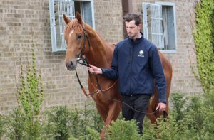Galileo Gold at Hugo Palmer's recent open day