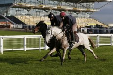 Smad Place gets a pre-race gallop at Newbury (November 2014)