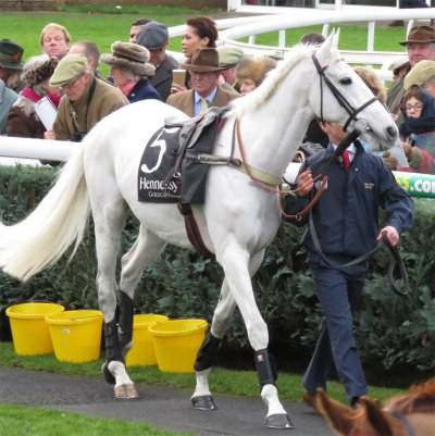 Smad Place before the Hennessy Gold Cup (2015)