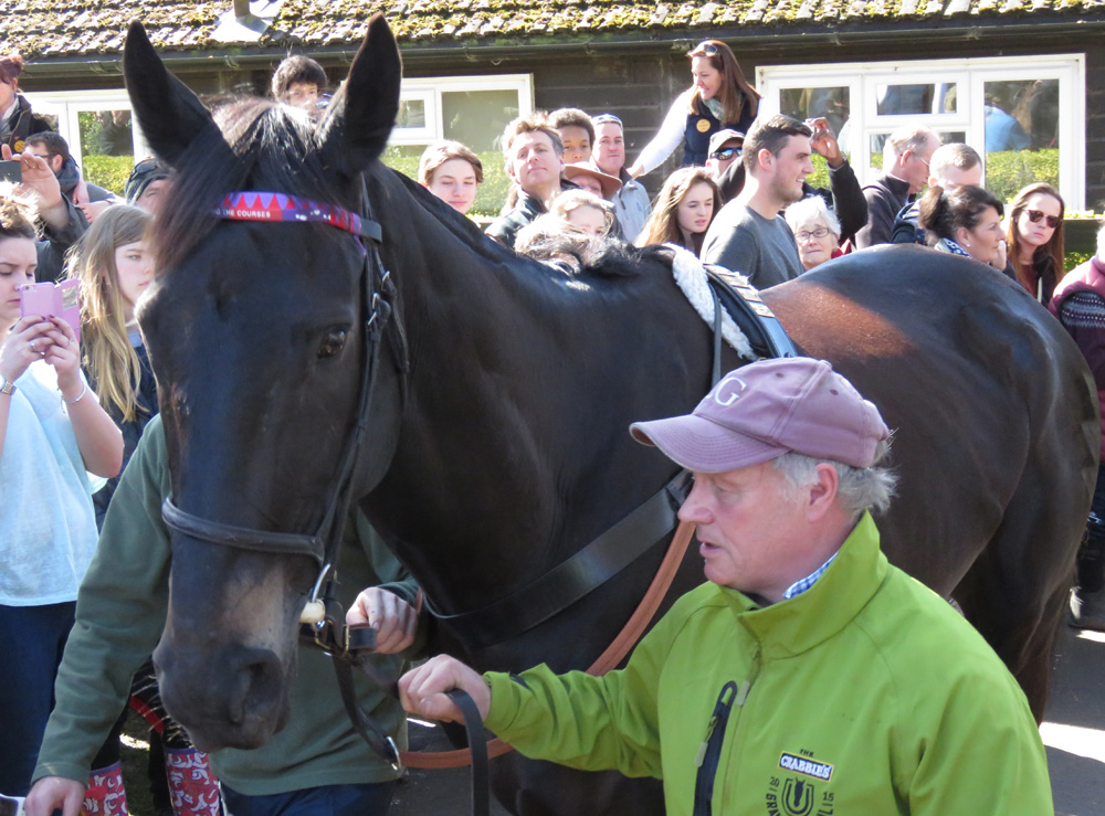 Lambourn Open Day 2016: Many Clouds - led by his groom Chris 'CJ' Jerdin - parades through the crowds