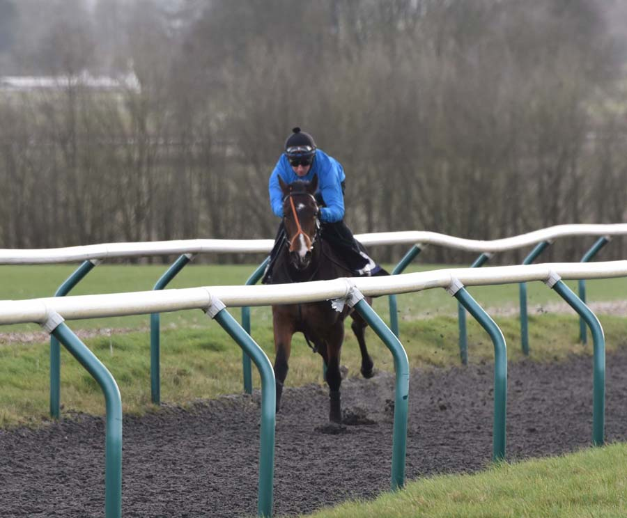 Manton: Martin Dwyer takes the club horse up the all weather gallop (Photo courtesy Graham Robertson)