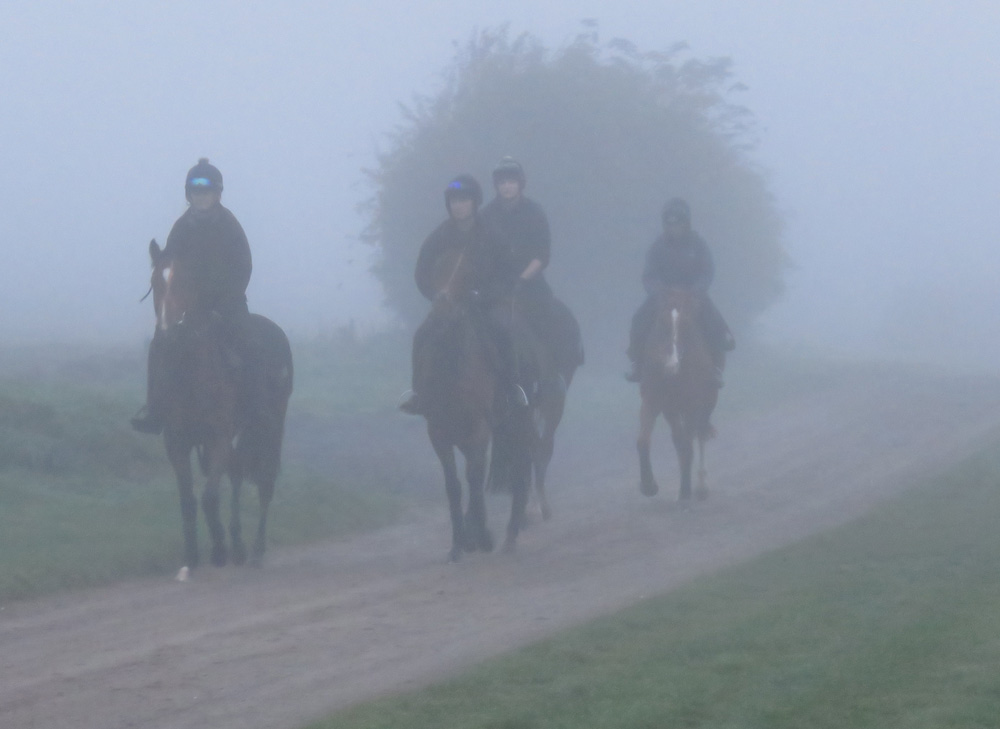 A foggy Manton morning: horses coming back from the gallops