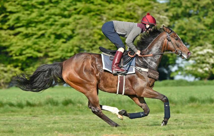 Limato on the gallops with Harry Bentley aboard (Photo: Francesca Altoft for Newbury Racecourse)