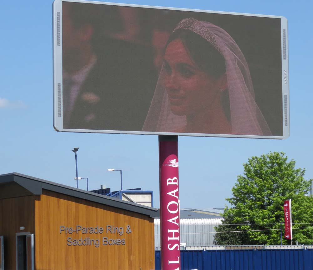 An unusual sight on the parade ring's big screen