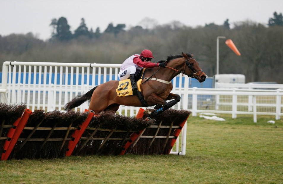 Violet Dancer wins the 2015 Betfair Hurdle (Photo: Newbury Racecourse)