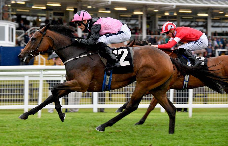 A win for Paul Mulrennan and Orlaith (Photo: Newbury Racecourse)