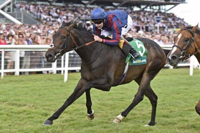 The Tin Man winning the 2016 bet365 Hackwood Stakes