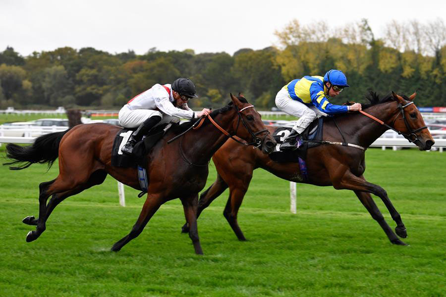 Trueshan (far side) on the way to victory (Photo: Newbury Racecourse)