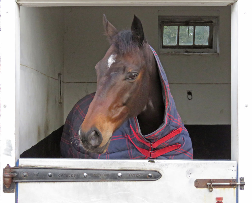 Highly Prized in his box at Bonita Racing Stables